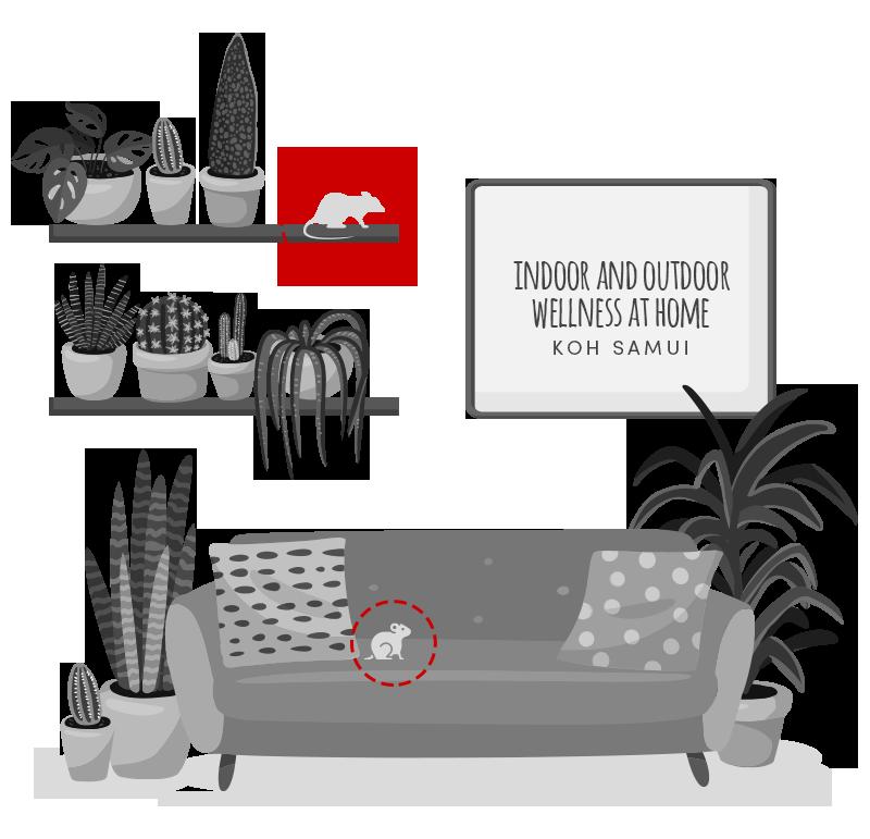 Deratization - 3D Pest Control Koh Samui